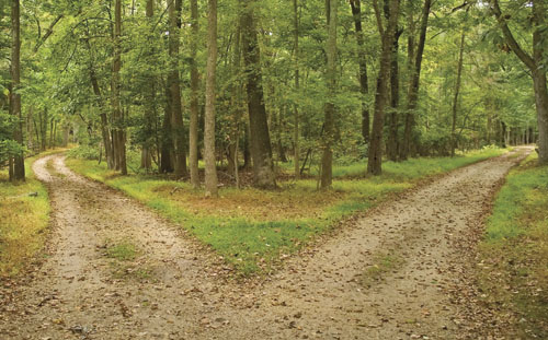 """Two roads diverge in a yellow wood..."""